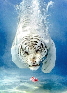 Tiger Dive