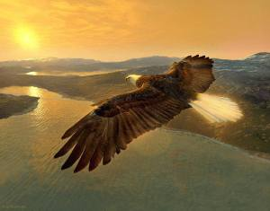 Divine Conception_Soaring Eagle